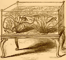 A drawing in brown ink on an ocher background. A rectangular glass aquarium tank sits on a wooden stand with carved, curled legs, and contains two fish as well as plants with wavy grass-like leaves.